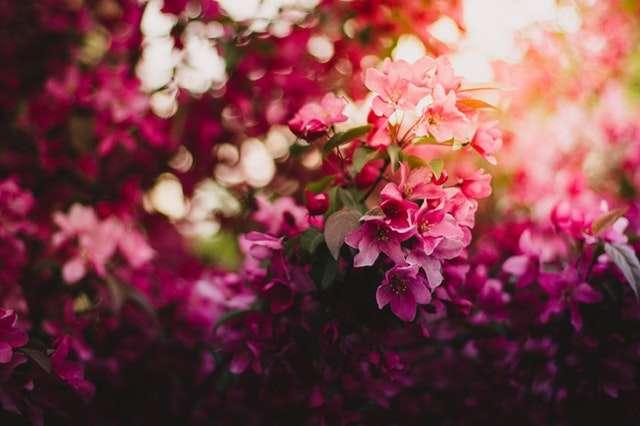 История цветов