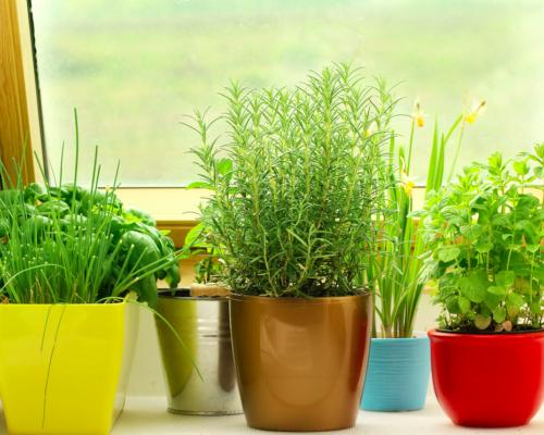 Советы практика: выращиваем цветы дома
